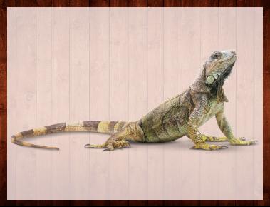 Reptiles & Accessories