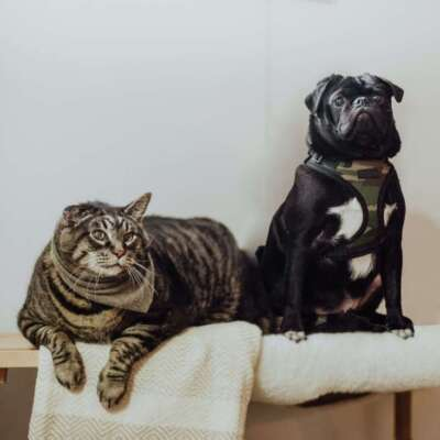 Pets & Pet Accessories